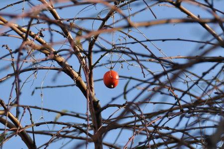 2011.11.20_tanbo_003.jpg