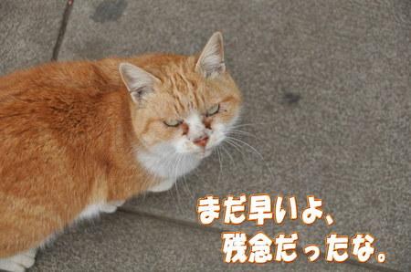 2012.01.14_enoshima_005.jpg