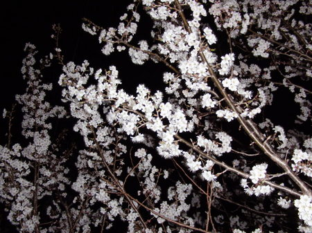 2012.03.25_satounishiki_001.jpg