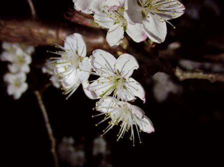 2012.03.25_satounishiki_003.jpg