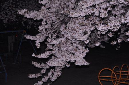 2012.04.10_sakura_001.jpg