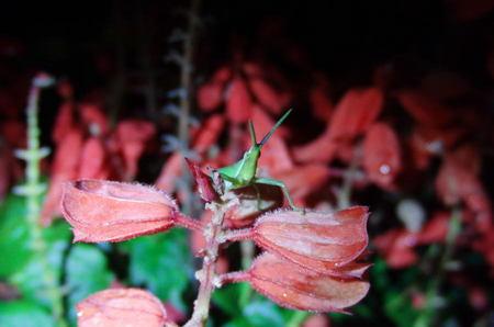 2012.09.23_onnbubatta_001.jpg