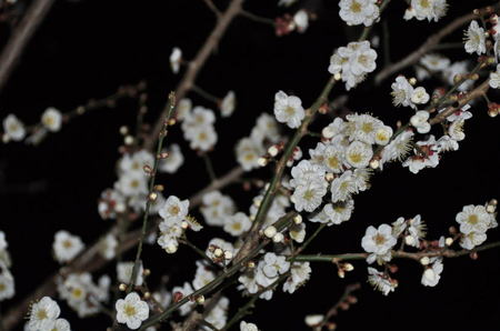 2013.02.28_hakubai_001.jpg