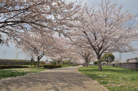 2014.04.09_sakura_001.jpg
