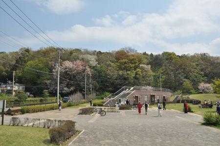2014.04.09_sakura_004.jpg