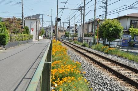 2014.05.10_enoshima_007.jpg